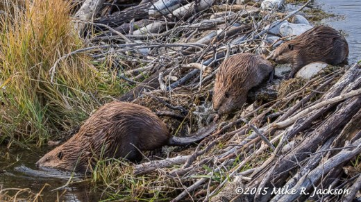 Beavers Crossing Dam