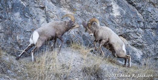 Bashing Rams