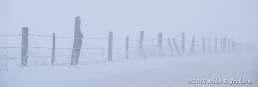Foggy Fence Line