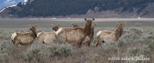 Elk Group
