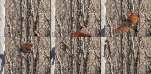 Flicker Sequence