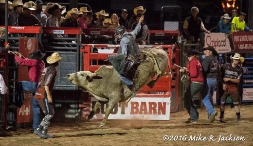 Last Bull Rider