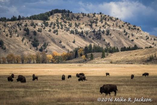 Elk Flats