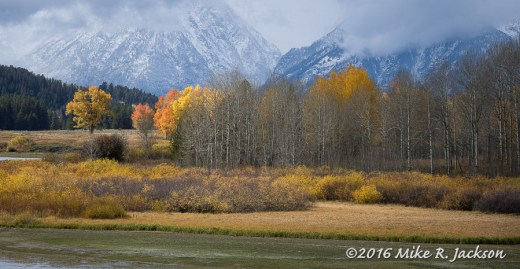 Oxbow Bend Hold Outs