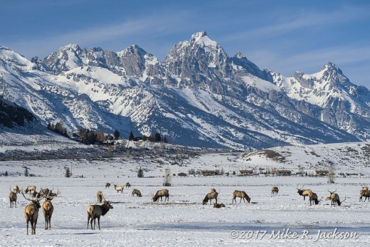 Elk Refuge and the Grand
