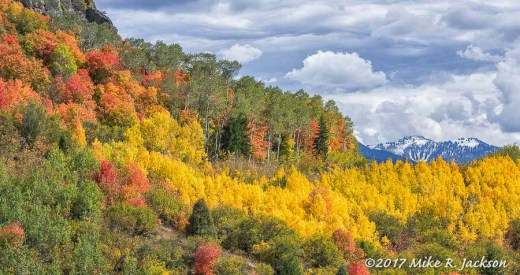 Mtn. Maples and Aspens