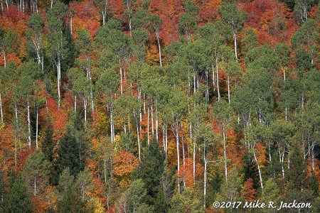 Foliage Reports September/October 2017
