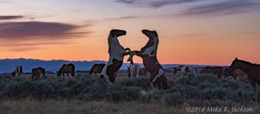 Morning Stallions
