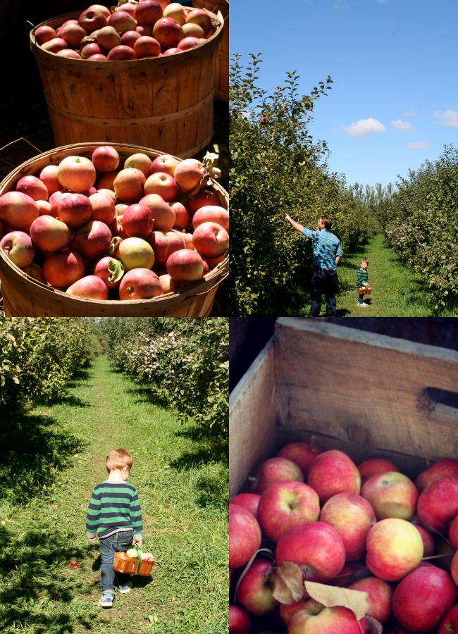 Apple Picking in #Ottawa www.bestofthislife.com
