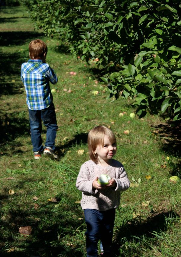 Fall Apple Picking at Log Cabin Orchard in Ottawa