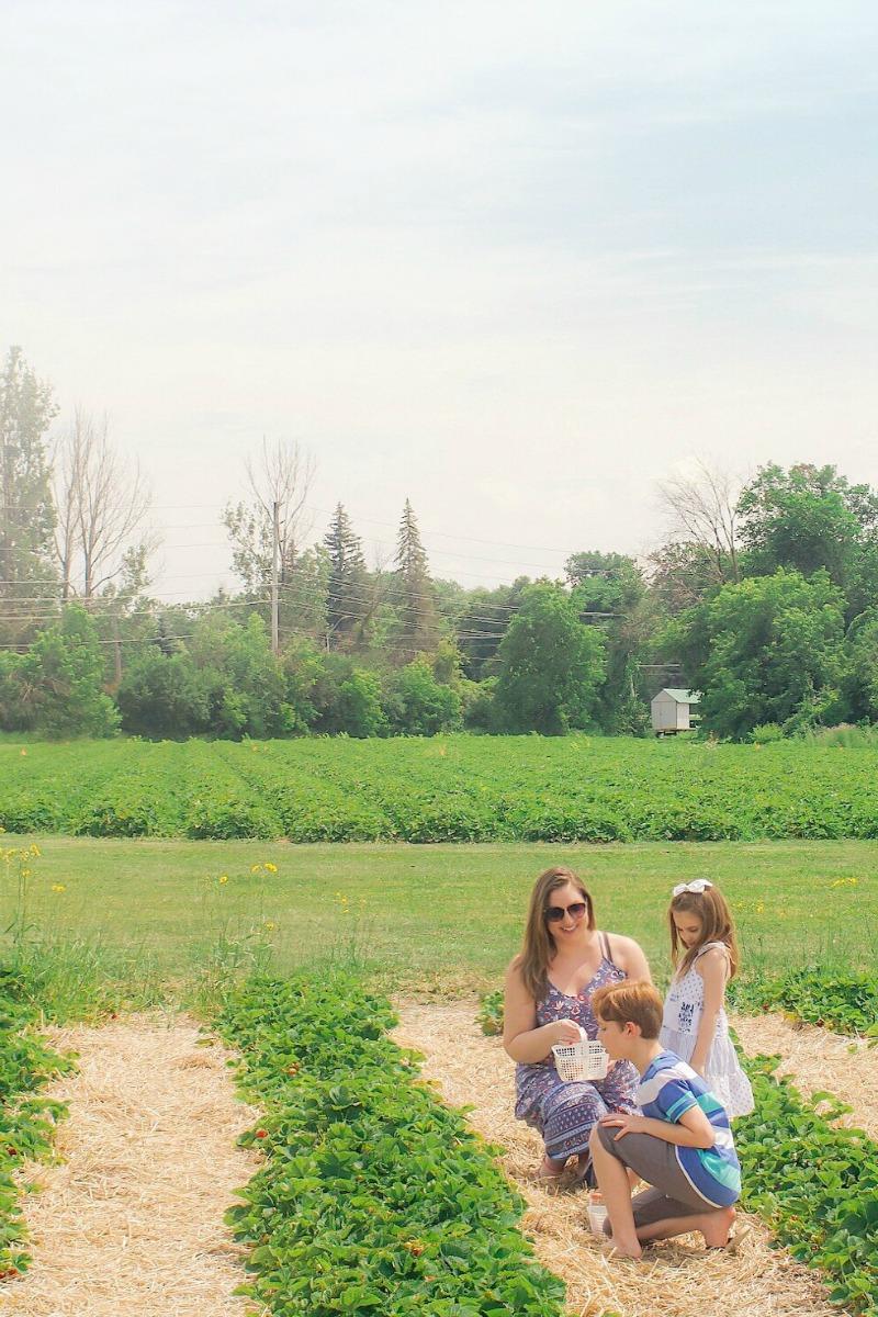 Strawberry picking in Ottawa