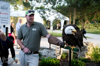 Up close with the Bald Eagle