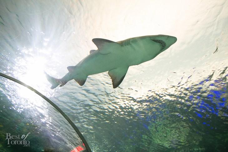 Ripleys-Aquarium-BestofToronto-2013-010