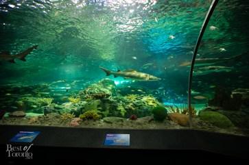 Ripleys-Aquarium-BestofToronto-2013-014
