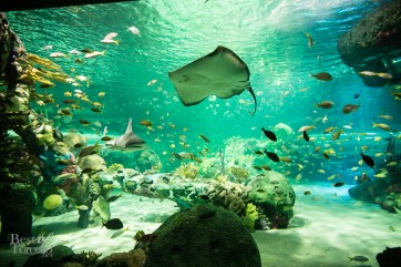 Ripleys-Aquarium-BestofToronto-2013-021