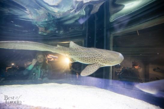 Ripleys-Aquarium-BestofToronto-2013-035