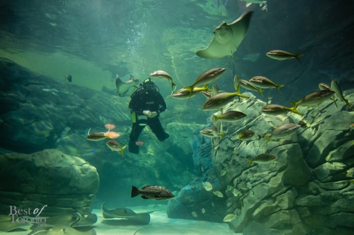 Ripleys-Aquarium-BestofToronto-2013-050