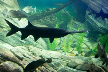 Ripleys-Aquarium-BestofToronto-2013-060