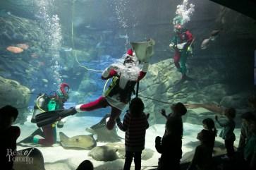 Ripleys-Aquarium-Scuba-Claus-BestofToronto-2013-005