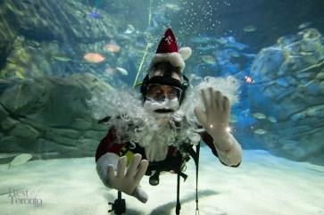 Ripleys-Aquarium-Scuba-Claus-BestofToronto-2013-006