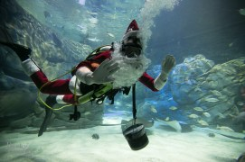 Ripleys-Aquarium-Scuba-Claus-BestofToronto-2013-007