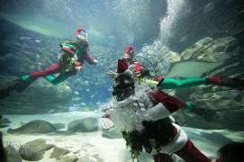 Ripleys-Aquarium-Scuba-Claus-BestofToronto-2013-008