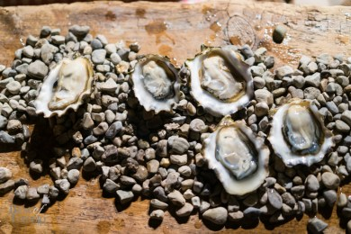 Fresh shucked oysters | Hooked Inc