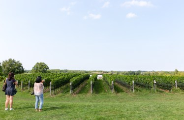 A view of Ravine Vineyard