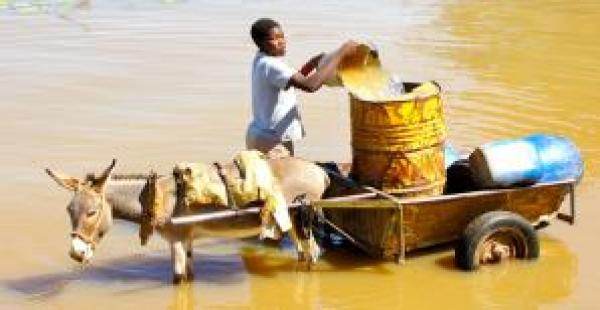 boy with donkey collecting water