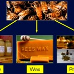 Honey Bee Health and Pollination / BioForum