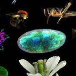 Non-Majors Biology – A Free Course