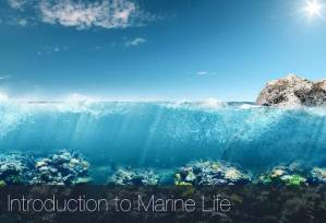 Introduction to Marine Life