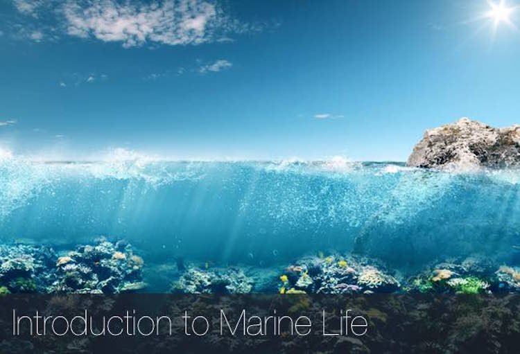 Introduction to Marine Life