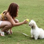 Take The Top Courses In Dog Training