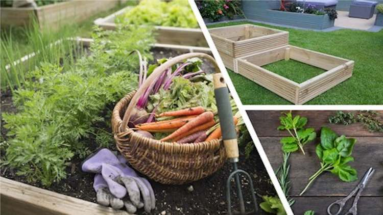 5 Easy-to-grow vegetables & herbs