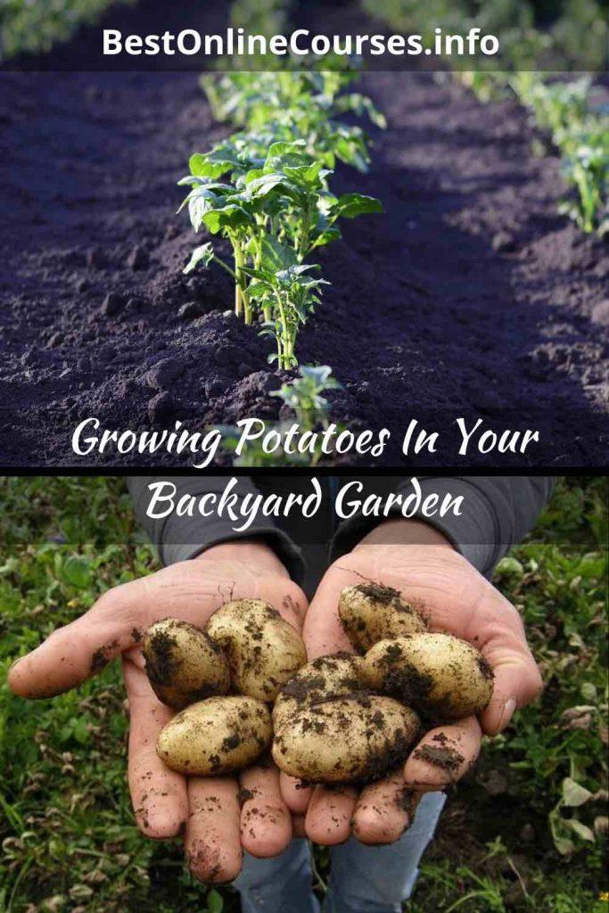 BestOnlineCourses-Growing Potatoes In Your Backyard Garden