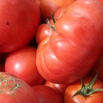 Garden grown tomatoes made easy