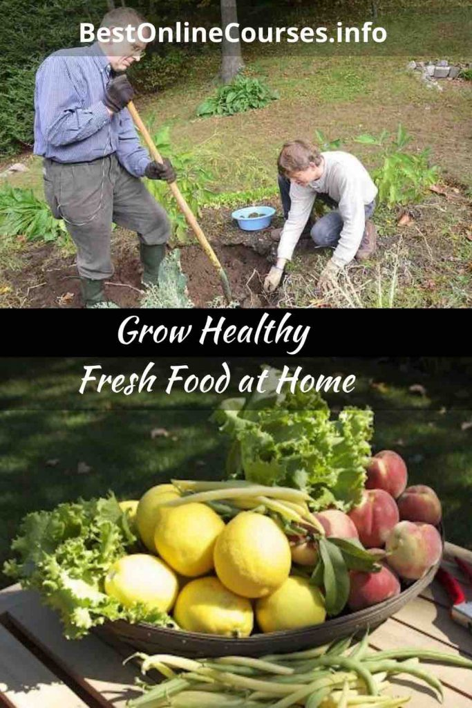 Grow Healthy Fresh Food at Home