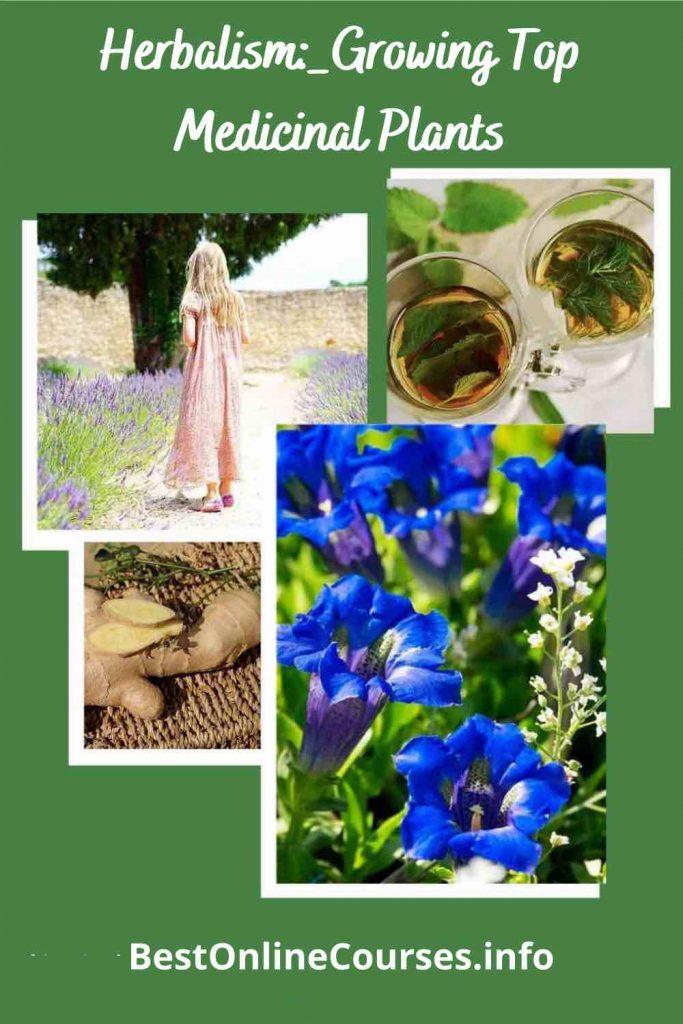 Herbalism_-Growing-Top-Medicinal-Plants-6