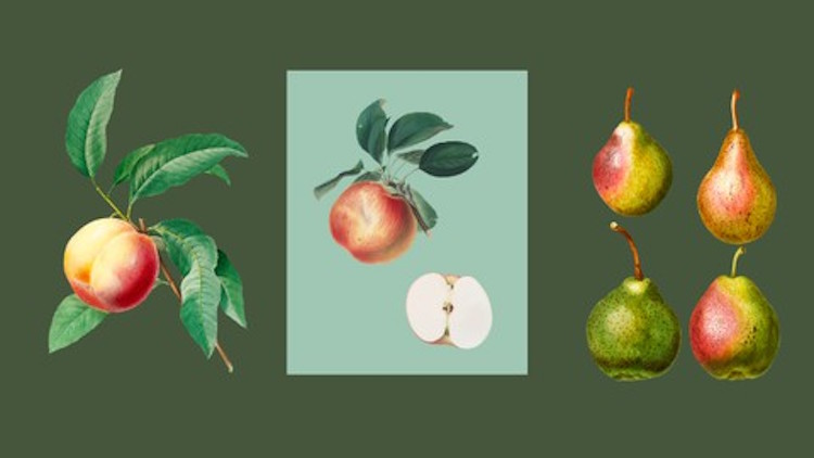 Integrating Fruit Trees into Your Garden