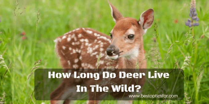 How Long Do Deer Live In The Wild