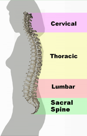 4 Causes Of Loss of Lumbar Lordosis And What Is Lordosis Anyway?