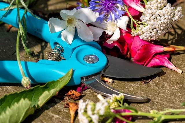 Best pruning scissors to cut tree branches