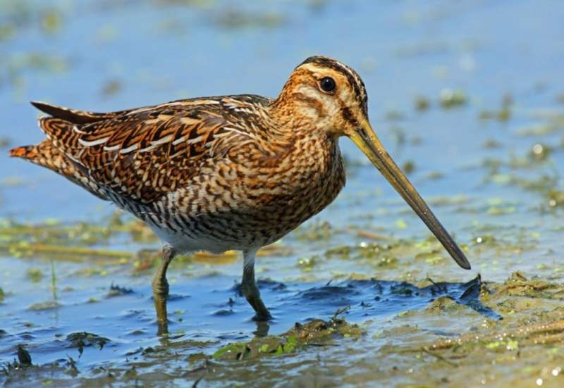 What Is Snipe Hunting?