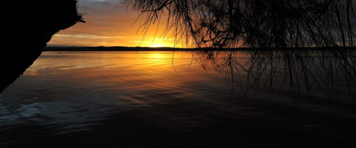 cropped-SunsetTree.jpg