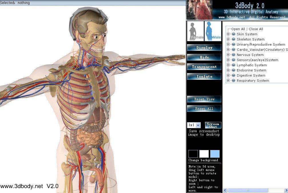Free 3d Anatomy Interactive Human