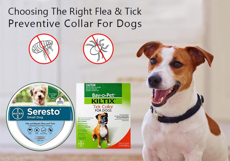 Choosing The Right Flea & Tick Preventive Collar For Dogs