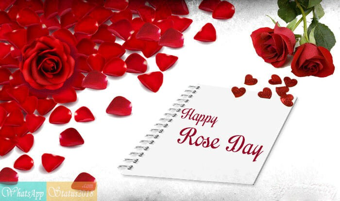Rose Day 2021 Greeting Pictures And Images