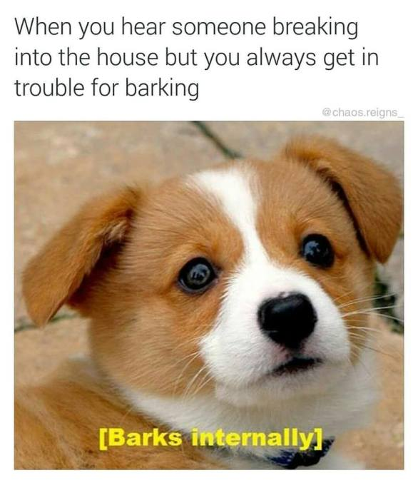 Can You Get In Trouble For Your Dog Barking