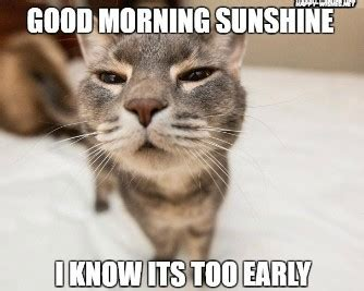 good morning sunshine cat meme